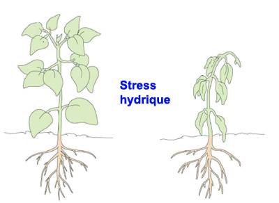 stress_hydrique.png